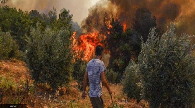 Dramáticas evacuaciones por mar mientras los incendios forestales se desatan en Italia y Turquía Temmuz 31, 2021